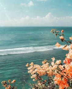Wonderful Photo tropical vacation Strategies For the decision to an Aesthetic-Plastic Surgery or alleged plastic surgery, there are many, individ Nature Aesthetic, Beach Aesthetic, Flower Aesthetic, Summer Aesthetic, Aesthetic Photography Nature, Aesthetic Collage, Travel Aesthetic, Adventure Aesthetic, Orange Aesthetic