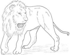 Lion drawing in pencil Pencil Drawings Tumblr, Pencil Sketches Easy, Pencil Drawings For Beginners, Pencil Drawings Of Girls, Animal Drawings, Easy Drawings, Drawing Tutorials, Art Tutorials, Girl Face Drawing