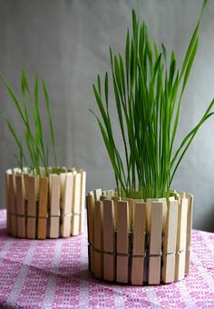 Simple pot to use as a gift for moms. Uses a tuna fish can and clothes pins. Could put a pansy in the center or maybe herbs?