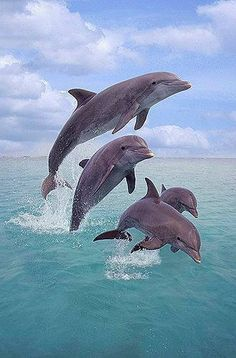 Family of dolphins in the air