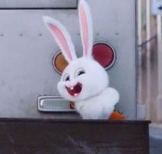 Cute Disney Wallpaper, Cute Cartoon Wallpapers, Cartoon Pics, Snowball Rabbit, Cute Bunny Cartoon, Bunny And Bear, Secret Life Of Pets, Pet Rabbit, Disney Love