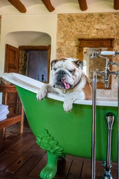 Rub-a-dub-dub...bulldog in the tub!