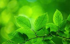 Turn Over A New Leaf Quotes Backgrounds HD Wallpaper
