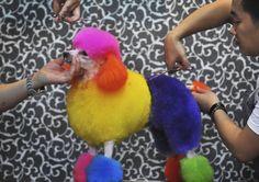 Foute mode: Chinezen kleuren hun poedel - Het Nieuwsblad
