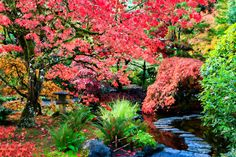 Japanese Garden Photograph Print  Restful by EyeLightPhotography, $22.00