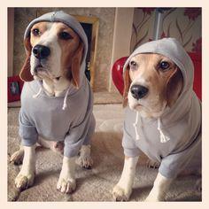 Deefa & Benjy, the beagle boys ;)