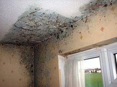 Una serie di consigli semplici da seguire per combattere la formazione di muffa sui muri e sulle pareti di casa.