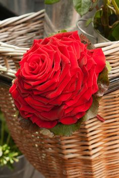 Carmen Rose Bouquet by Helen Cranmer Floral Design, London.