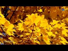▶ ERNESTO CORTAZAR - Les Feuilles Mortes(Autumn Leaves) - YouTube