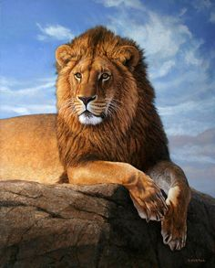 The New King by Gabriel Hermida is part of Lion painting The New King is a painting by Gabriel Hermida which was uploaded on August 2008 The painting may be purchased as wall art, home decor, - Wild Animals Photos, Animals And Pets, Cute Animals, Lion Images, Lion Pictures, Big Cats Art, Cat Art, Beautiful Lion, Animals Beautiful