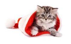 Afbeeldingsresultaat voor kerstkaart met dieren
