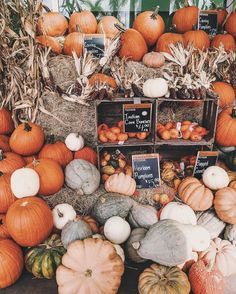 A bunch of pumpkins shades! #seasons #fall #outono #autumn #fallseason #leaves #coloursofautumn @nicholeciotti
