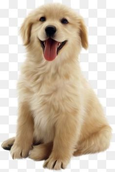 This PNG image was uploaded on February pm by user: JasonGodwi and is about Ancient Dog Breeds, Animal, Animals, Arbol, Carnivoran. Dog Background, Background Wallpaper For Photoshop, Best Background Images, Golden Retriever Cartoon, Dogs Golden Retriever, Puppy Clipart, Cute Dogs Images, Puppy Images, Dog Wallpaper