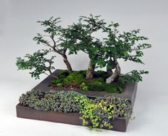 Ron Lang's inset planter with thin granite glaze. In the 2014 November issue of Ceramics Monthly Ron Lang discusses bonsai containers. http://ceramicartsdaily.org/ceramics-monthly/ceramics-monthly-november-2014/
