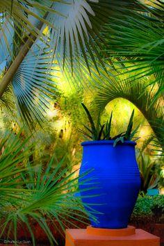 jardin majorelle in marrakech Blue Garden, Tropical Garden, Dream Garden, Garden Art, Garden Design, Patio Chico, Moroccan Garden, Moroccan Design, Shades Of Blue