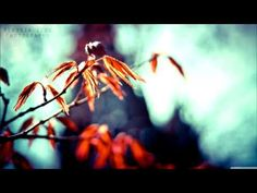 Abraham Hicks ~ Your Frequency Is The Root Of What Happens In Your Life