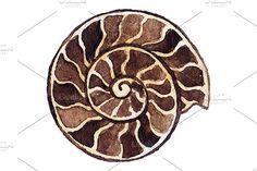Watercolor seashell ammonit vector by Art By Silmairel on @creativemarket