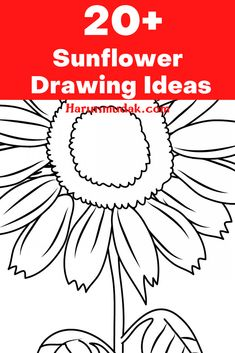 Sunflowers, as most of you know, are useful creatures if you want to see these creatures on your paper, you can find sunflower drawing ideas here.