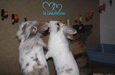 Futterketten beschäftigen eure Kaninchen, fordern sie und es ist auch noch super zum beobachten! ❤️  Was man braucht:  Gemüse und eine Schnur zum auffädeln - mehr nicht!