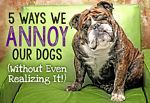 5 Ways We Annoy Our Dogs (Without Even Realizing It!)