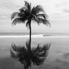 Black and White Palm Tree, http://yourweightlossexperts.com/