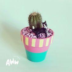#cat #cutecat #gatito #kitten #miniature #mini #cactus #minicactus #aww #sweet #gift #deco #homedecor