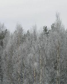 Grey Sunday - but beautiful View from my balcony #talvi #winter #igwinter #ig_winter #winterwonderland #suomi #finland #thisisfinland #sundaypic #lifestyleblogger #nelkytplusblogit #åblogit