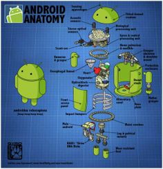 #Android #Anatomy