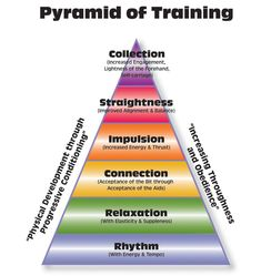 A Look at the Classical Pyramid of Training | Your Horse Farm | Do you know the pyramid of horse traing? If not, jump into this quick read for more info! #yourhorsefarm #equestrian #blog #lifestyleblog #horseriding #horseridinglessons