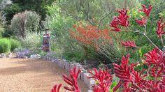 Australian native garden - like the wooden posts garden bed & plants