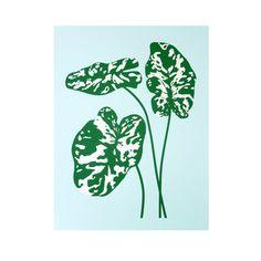 Hilo Beauty / Plant Planet Claire Nereim