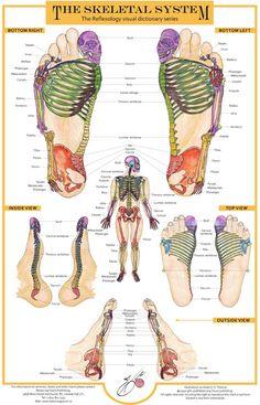 http://balancingtouch.ca/wp-content/uploads/2010/11/skeletal-system-chart-2008.jpg