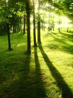 Light and Shadow Trees by HaleyGottardo on DeviantArt