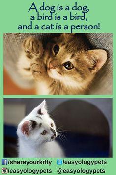A dog is a dog, a bird is a bird, and a cat is a person!
