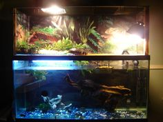 Coolest but largest turtle tank ever