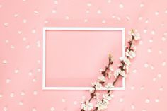 Blank Photo Frame, Pink Flowers On Living Coral Background, Copy Space. Pink And White Background, Leaf Background, Rose Frame, Flower Frame, Pink Roses, Pink Flowers, Blank Photo, Babys Breath Flowers, Small Potted Plants