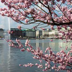 Hübsche Kirschblüten in Hamburg! #EuropaPassage #EuropaPassageHamburg #typischHamburg #moin #ahoi Most Beautiful Cities, Beautiful World, Places Around The World, Around The Worlds, Germany Travel, Travel Europe, Hamburg Germany, Great Pictures, Great Places