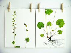 Print Set of Fringecup Herbarium Specimen Art, Matching Botanical Art Print Set, Vertical Wall Art, Pressed Flower Art, Botanical Print,