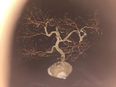 Winter is the best time of the year to see the actual branches and trunk of the tree - without the leafy covering Peace Art, Miniature Trees, One Tree, Wabi Sabi, Copper Wire, Bonsai, Sculpture Art, Miniatures, Nature