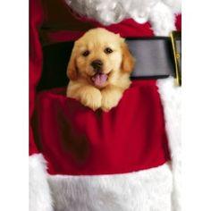 Santa's Pocket Puppy