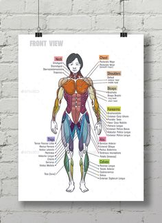 Buy Women Muscle Anatomy Сhart by Maxim_Andreev on GraphicRiver. Bodybuilding Women Muscle Anatomy Chart , illustration or can be used as poster in the gym. Skeletal Muscle Anatomy, Body Muscle Anatomy, Fitness Workouts, Fitness Bodybuilding, Bodybuilding Women, Tummy Workout, Boxing Workout, Human Anatomy Drawing, Nursing School Notes