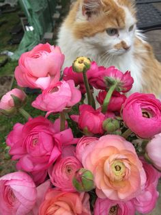 Prince loves pink flowers!