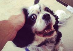 Living with a Deaf Dog | tips, tricks, info!