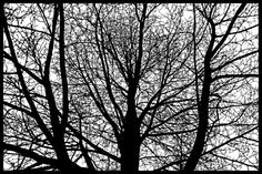 Mais de 25 mil buracos foram necessários para Joe Bagley compor sua peça artística mais detalhada, uma árvore desenhada somente através de cortes feitos a mão, em um único papel preto, tomou quase três meses de Bagley.