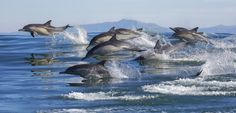 Dolphin brains show signs of Alzheimers Disease. Study suggests Alzheimers Disease and Type 2 diabetes might both be the price of a longer lifespan with altered insulin function the common cause.