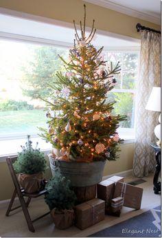 my real, LIVE Christmas tree...