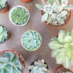 succulents for ever!