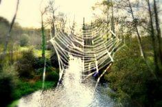 spider web Charlottes Web, Spider, Spiders