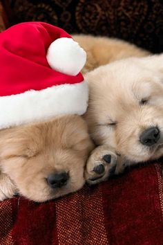 ᵔᴥᵔ This holiday season, book a stay for your pets at Bedminster Canine Kamp! http://www.caninekamp.com