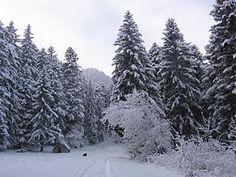 http://c.imdoc.fr/1/voyages/hiver/photo/8844794884/16849331ec8/hiver-foret-enneigee-1-img.jpg?v=11